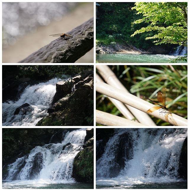 大自然の中のミニ秘境、鹿児島市内にある「轟の滝」